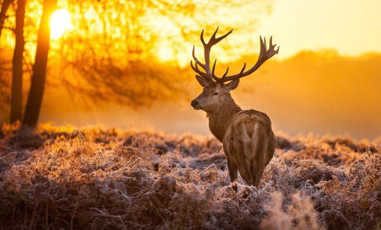 Vahşi Yaşam Ormanda Geyik Fotoğrafı