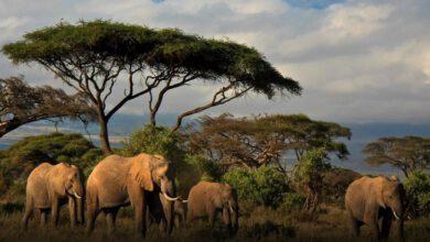 Filler Nerede Yaşarlar?