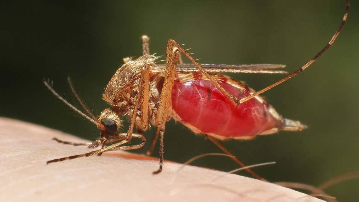 Sıtma Tedavisi