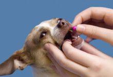 Photo of Köpeklere İlaç ve Hap Nasıl İçirilir?